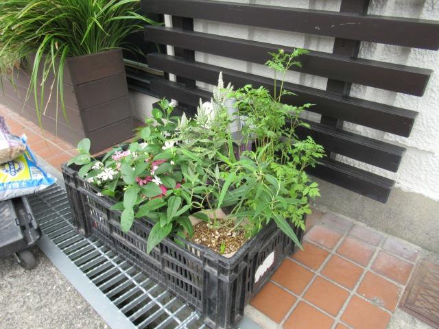 花壇の植え替えをしました